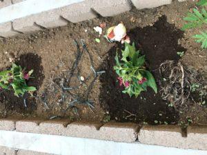 アパート花壇